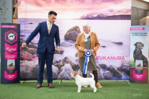 NKK aalesund 2019